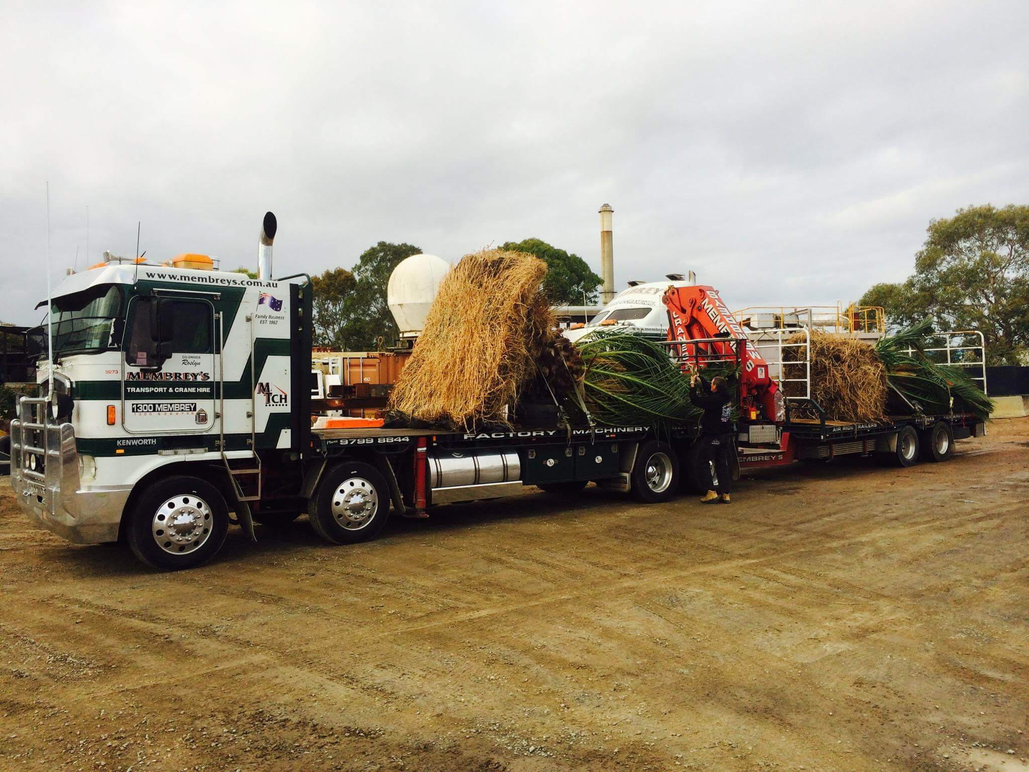 Palm Tree delivery on Hiab Crane Truck